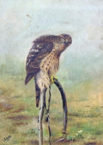 """The Demon"" (Goshawk on Bowperch)"