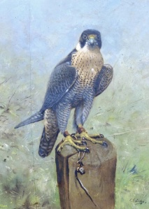 """Stratagem"" Passage Falcon"